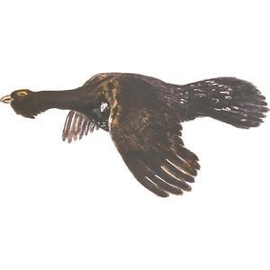 Jakt-tapet Flygande Tjäder