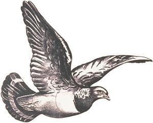 Jakt-tapet Flygande Duva