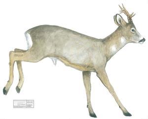 Jakt-tapet Råbock